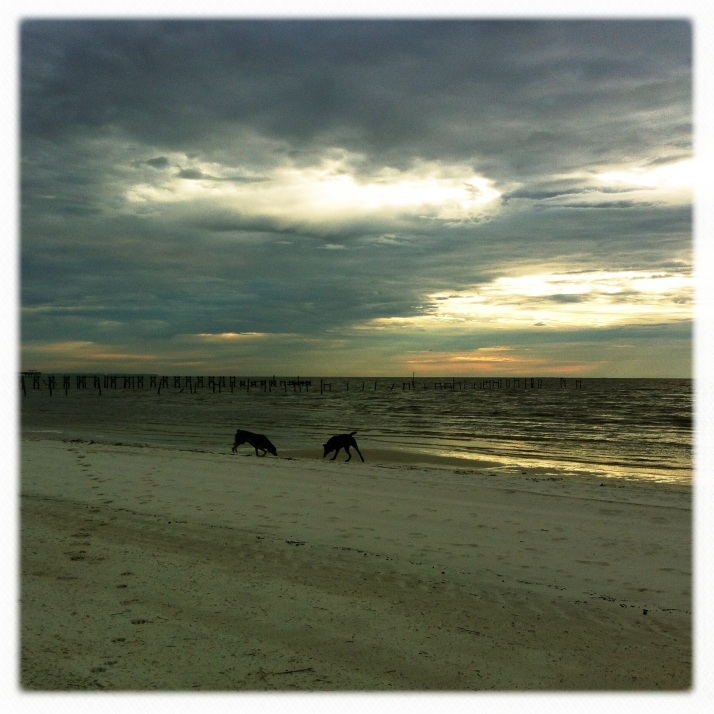 Illegal dogs on a white sand beach just after sunrise on a Monday morning.