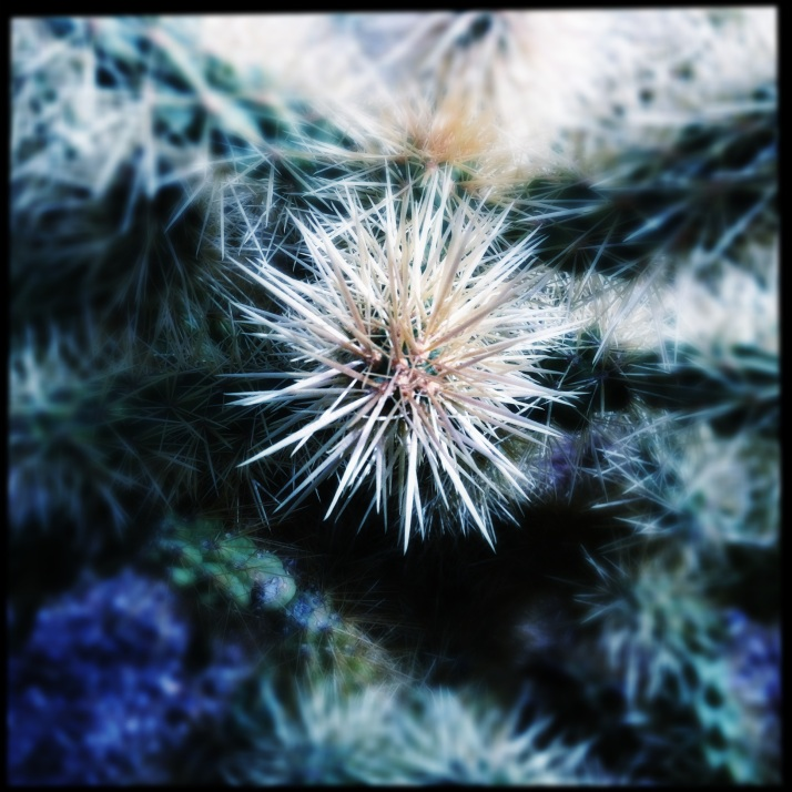 Ajo held so much more for me than just the magnificent desert, immeasurable delight in the company of friends, unsurpassed surprises, unsolvable puzzles, and of course the incomparable cholla.