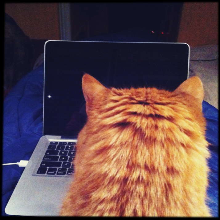 The iCat at work late at night, trying to post his pictures online.