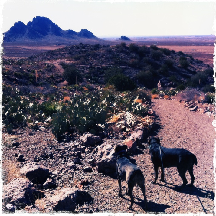 Raven and Stellar on the trail at Rock Hound State Park, New Mexico.