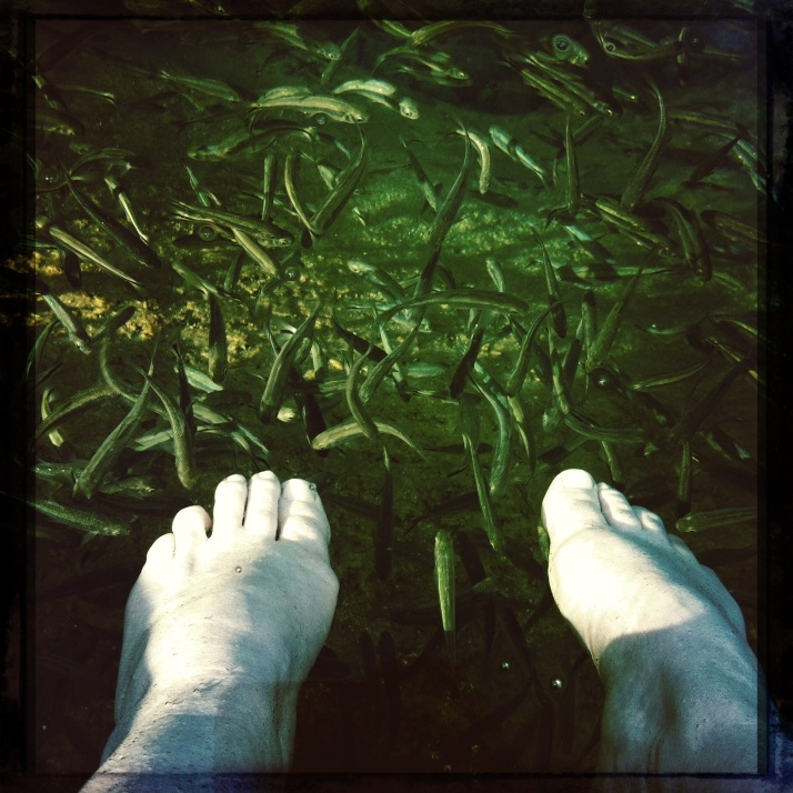 "Small and vicious fishes nibble my feet with their tiny teeth at Balmorhea State Park in west Texas. After a surprising and kind of scary encounter with the Border Patrol east of El Paso, in which all of us, the dogs, the cat, and I had to wait outside the Mothership while a federal dog inspected our hold for ""concealed humans or illegal narcotics,"" it was a relief to settle into our campsite. For me, this is a not-to-be-missed stop any time I'm crossing I-10 through Texas. The ""largest spring-fed swimming pool in the world"" is a constant 72-75 degrees F, and no matter the ambient air temp provides a blissful swim unfettered by lanes or even other people. Like a little fish myself I splashed and floated and played for only a short while this time, before my core complained of the cold."