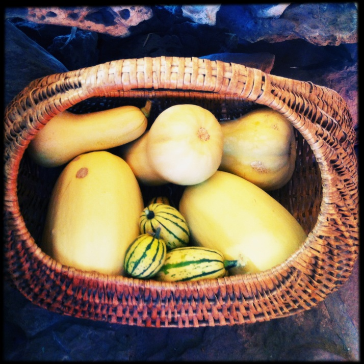 Butternut, spaghetti, and delicata squashes ready for delicious winter dinners.