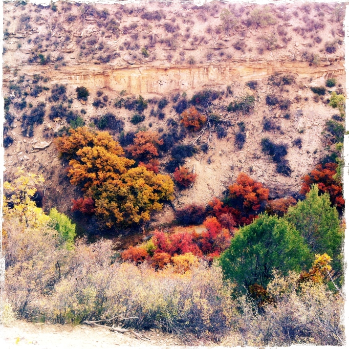 October 9, suddenly all the deciduous shrubs and trees in the canyon are glowing.