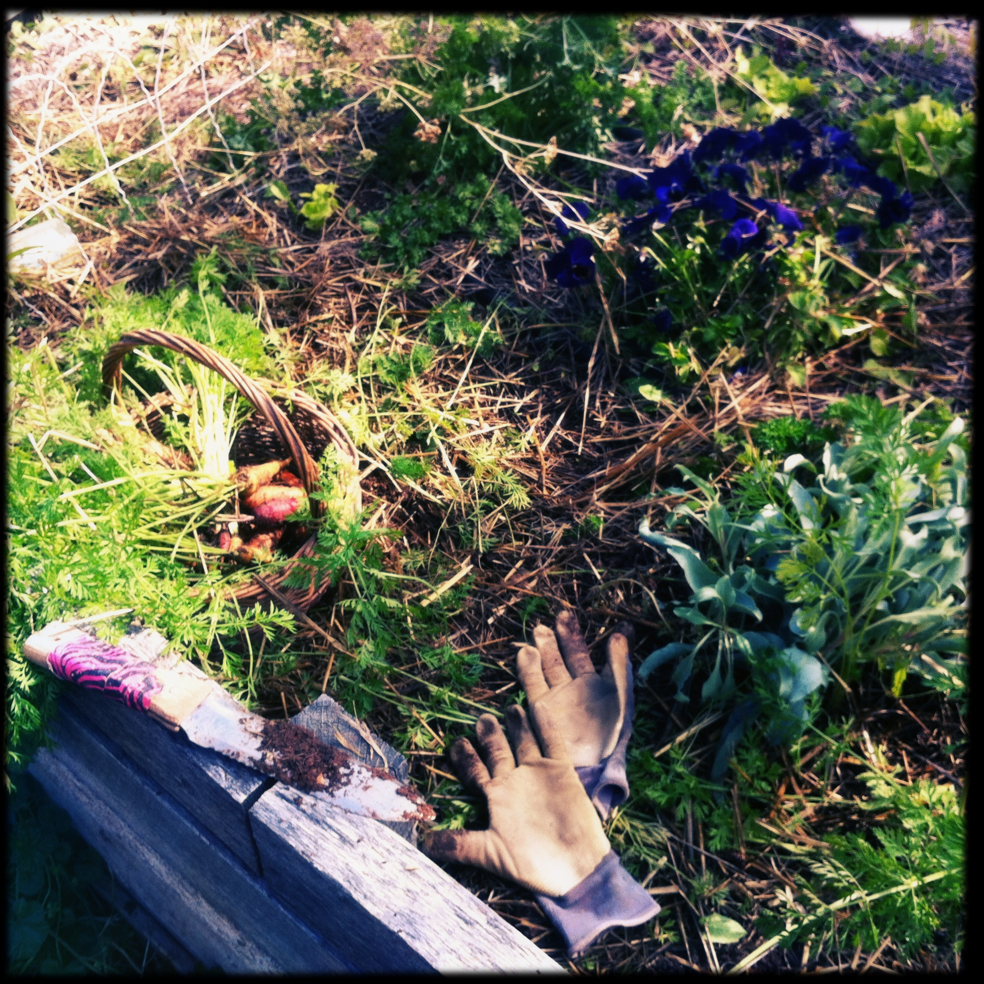 Gloves and digger in the garden.
