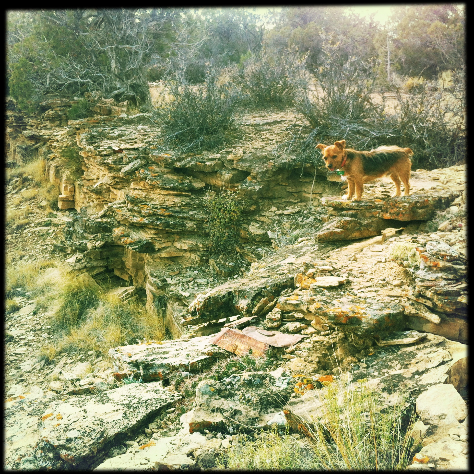Rocky on the rim of Buck Canyon two weeks ago.