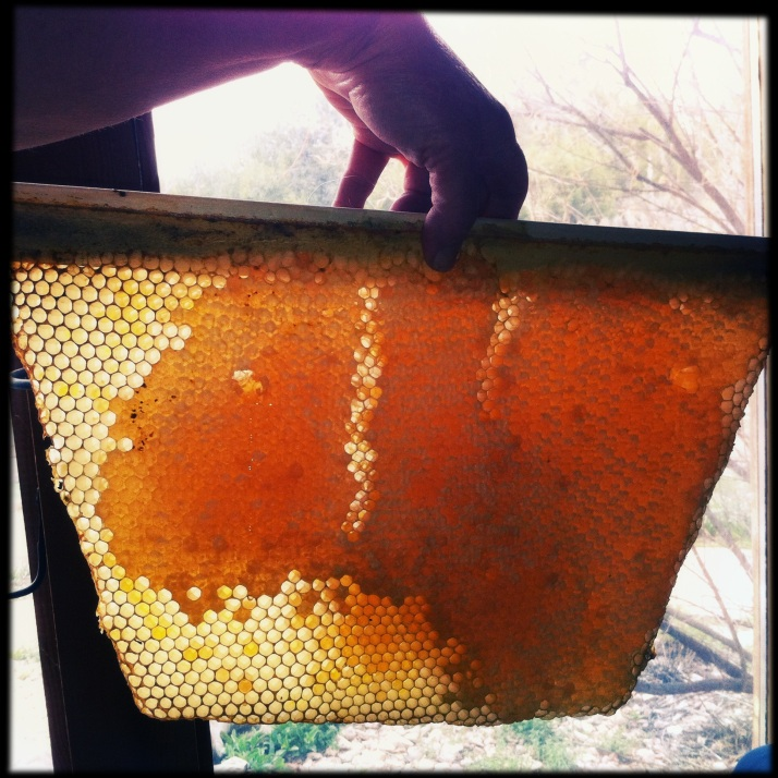 Corwin holds a honeycomb