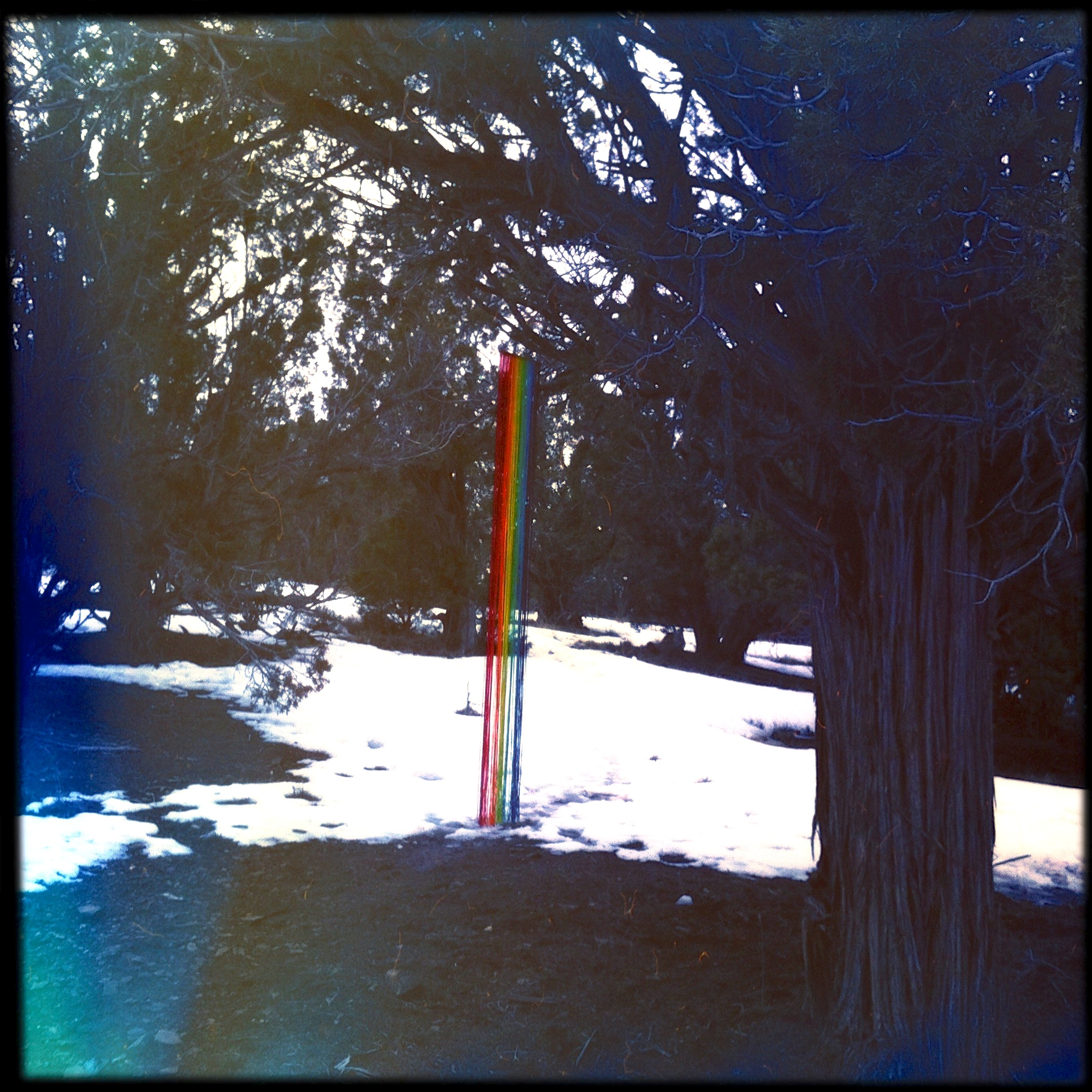 The next day, when my friend showed up to walk, she brought a rainbow streamer, an accidental replacement, which we hung on the same twig where the banner gave up the ghost. It's the little things that make my day.
