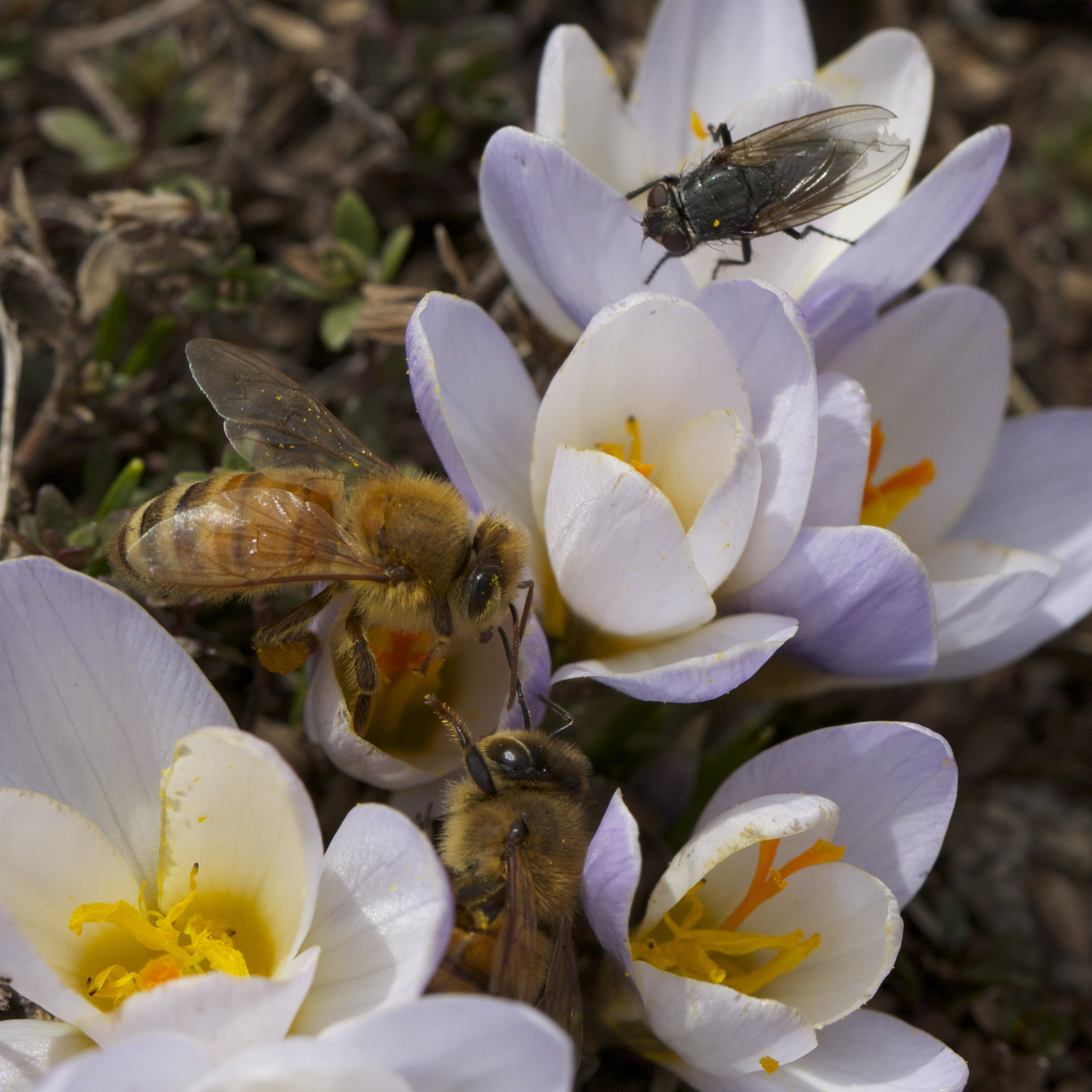And the shot of the day, sharing bees and a fly.