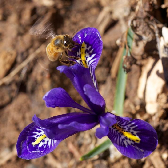 Landing Bee