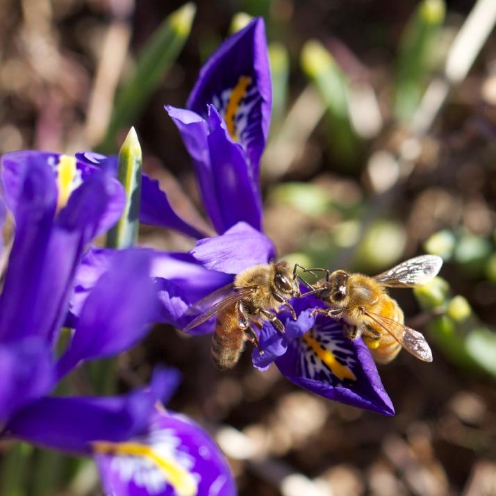 Communing Bees