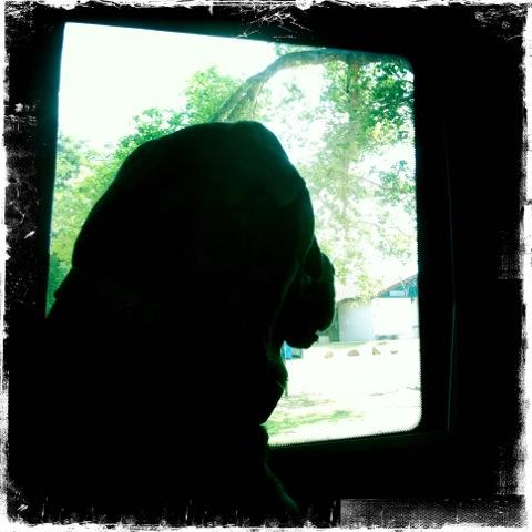 Stellar calmly regards the world through The Mothership window.