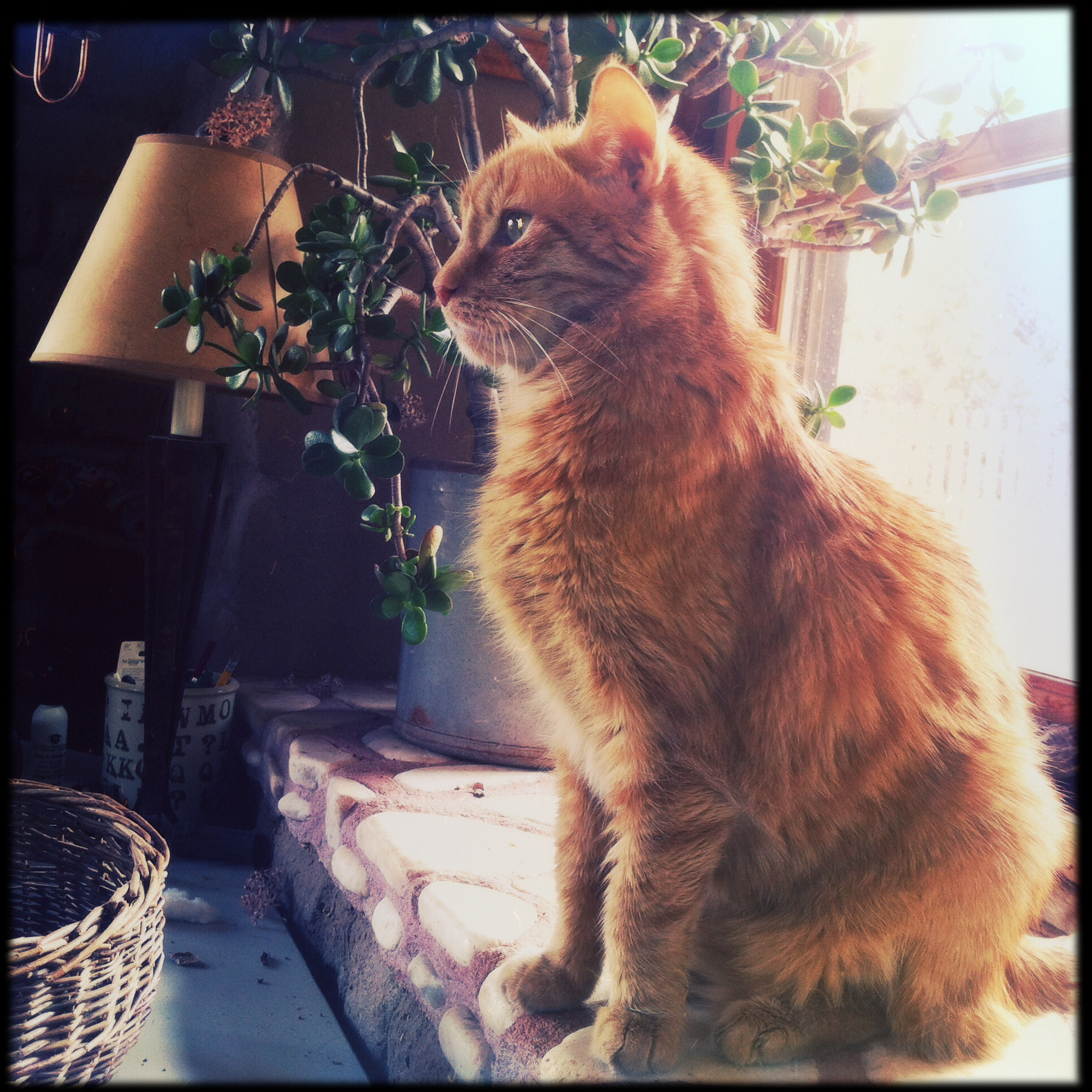 The last cat, Brat Farrar, struggles through a health crisis, striving, like me, for balance.