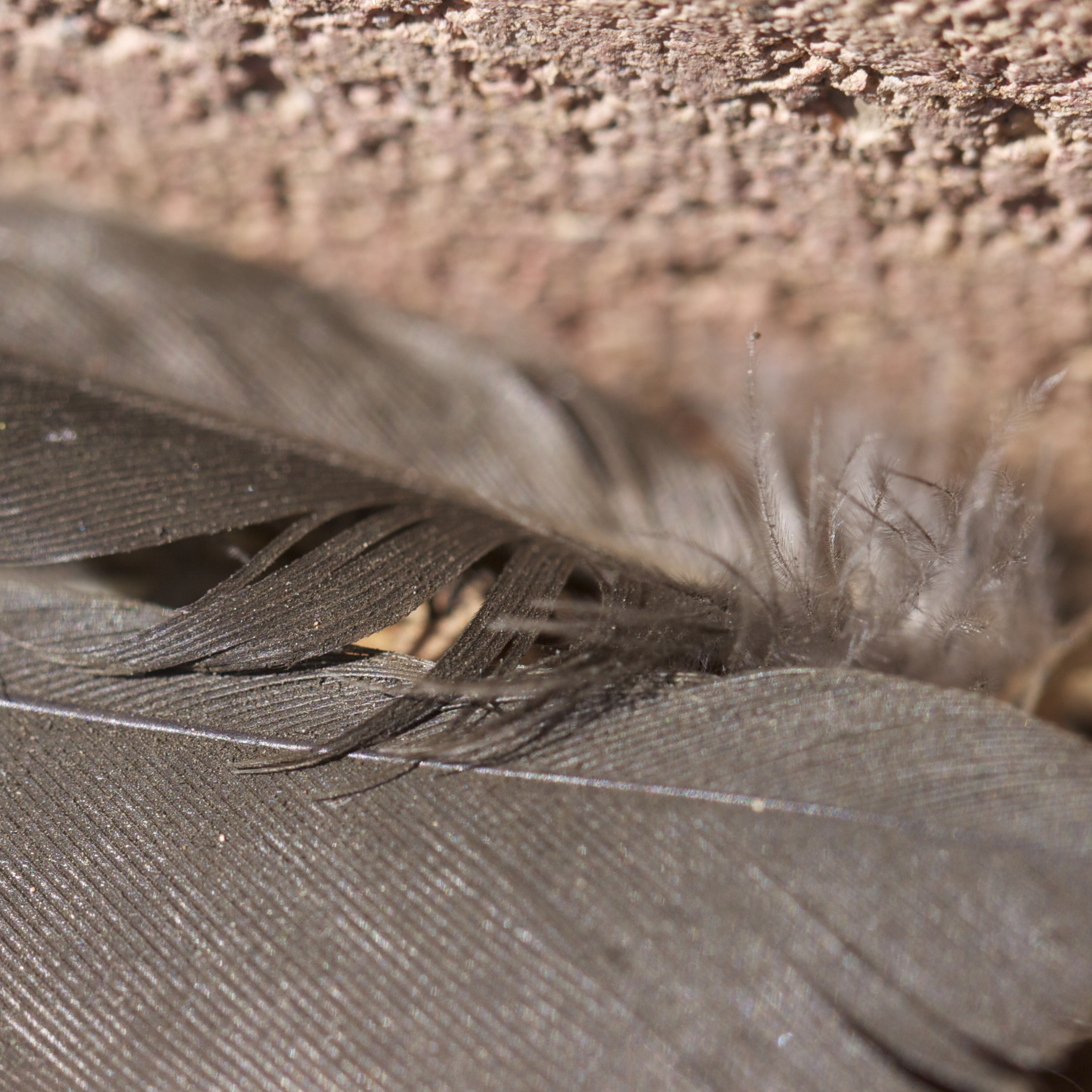 The day began in cinders. All that was left of the morning's drama a few filthy tail feathers on the ground.