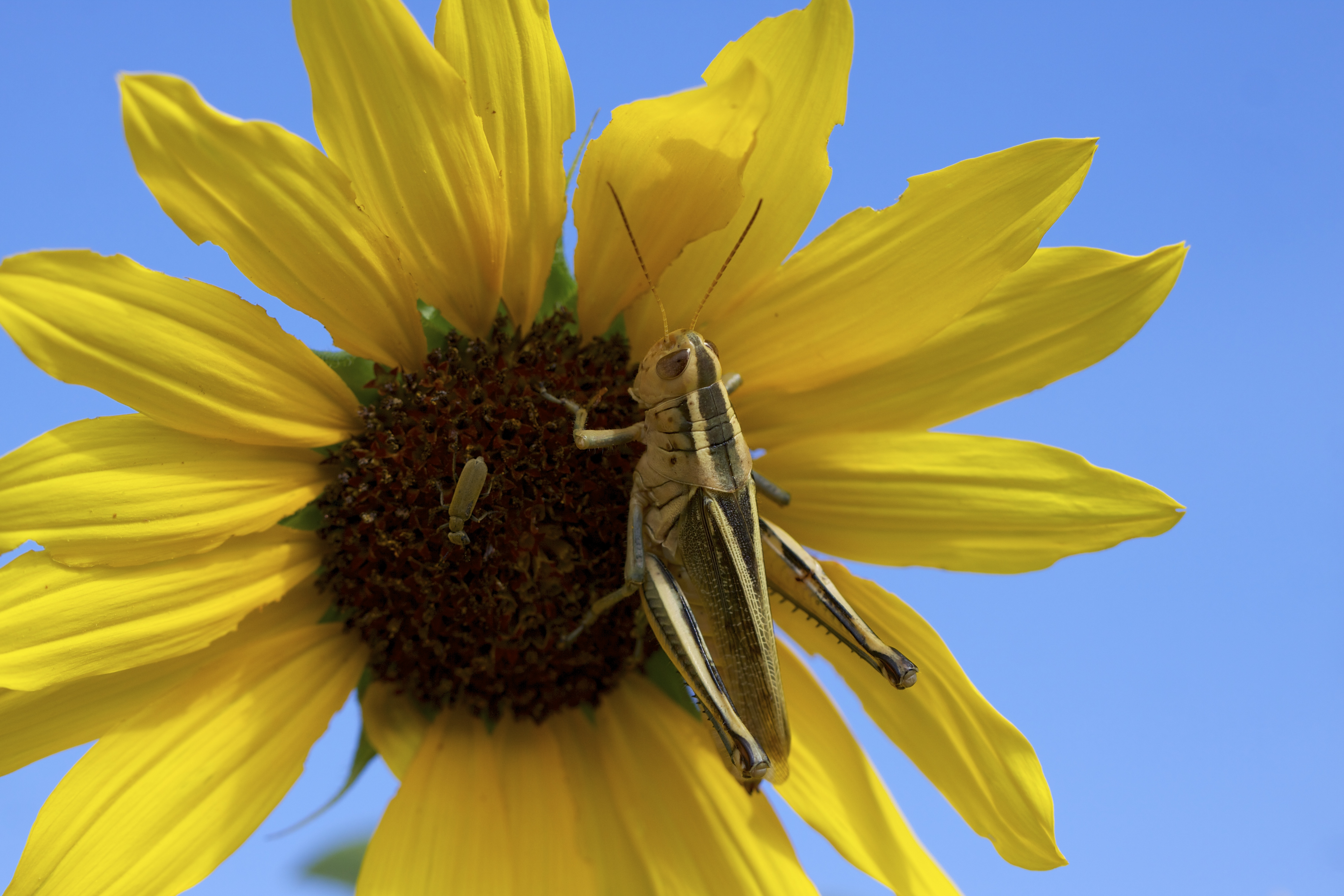 Despite not being in right relationship with the grasshoppers, I can recognize a striking composition when it's given.