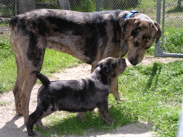 Raven and Stellar on her first day as his surrogate mother.