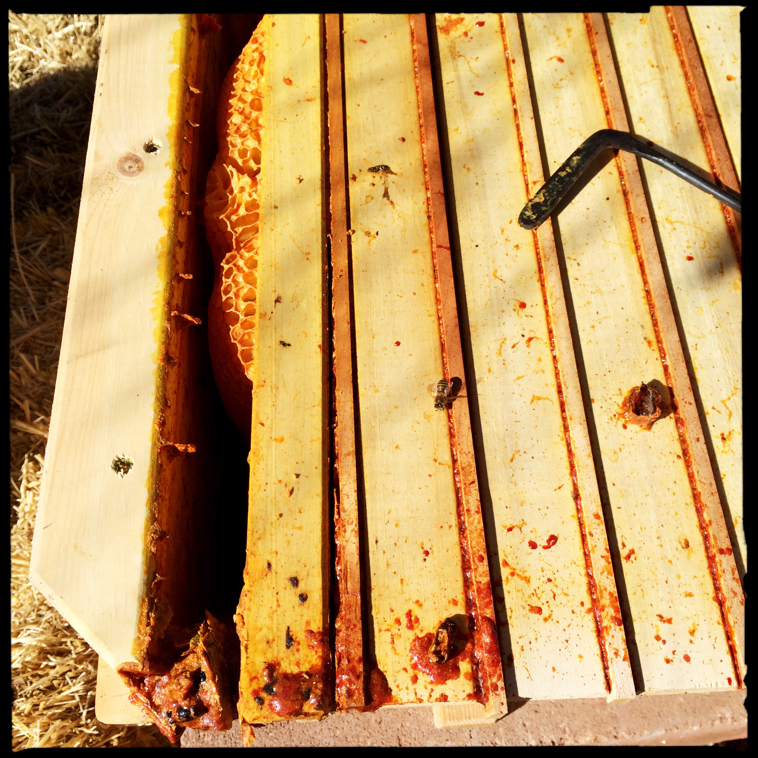 We used the hive tool to scrape propolis and separate the false back and the first bar.