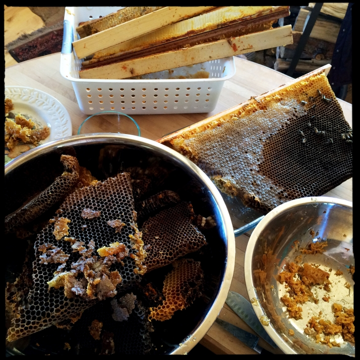 Honey in various stages of salvage.