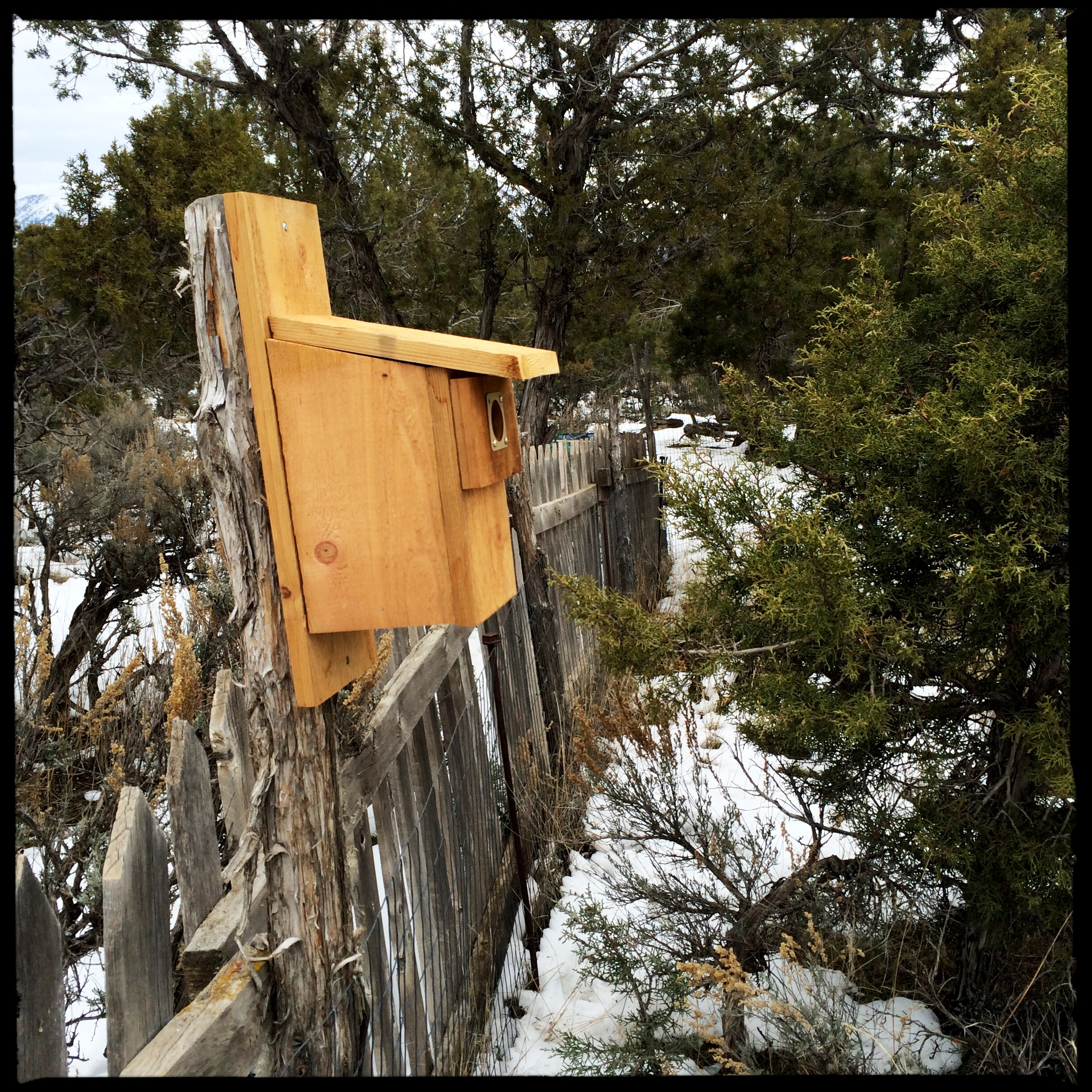 No sooner had I assembled and hung the bluebird house that Jean sent onto the south fence...