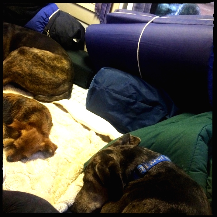 Three tired dogs curled up on the Mothership bed in the rain.