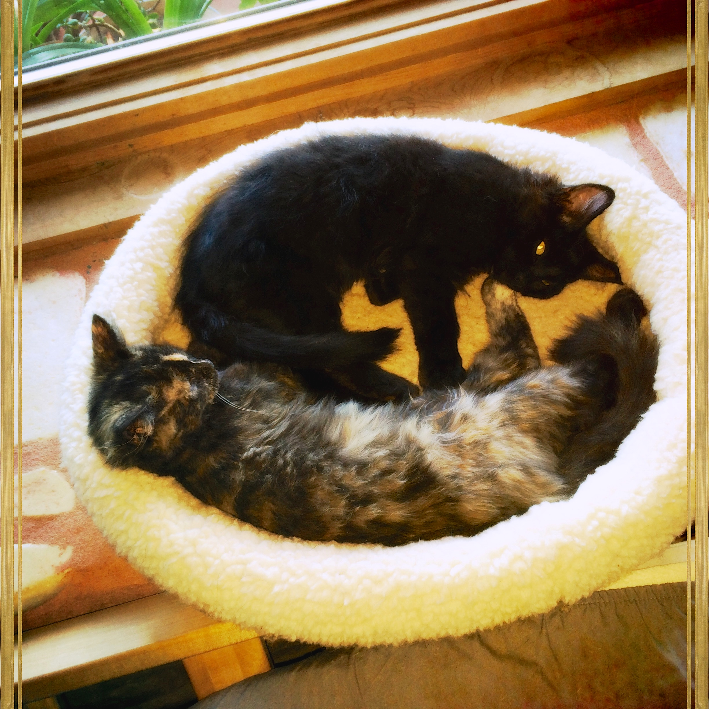 The kittens continue to make themselves at home, gradually extending their territory one windowsill at a time.