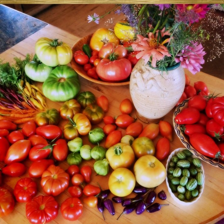 I've gotten into a nice, nurturing routine with the tomatoes, picking a few every morning, then making a sauce once a week or so with the Novas and Costoluto Genovese, enough to eat some and freeze some. And enjoying the cherry-pears and various slicers in scrambletts, sandwiches, and salads.