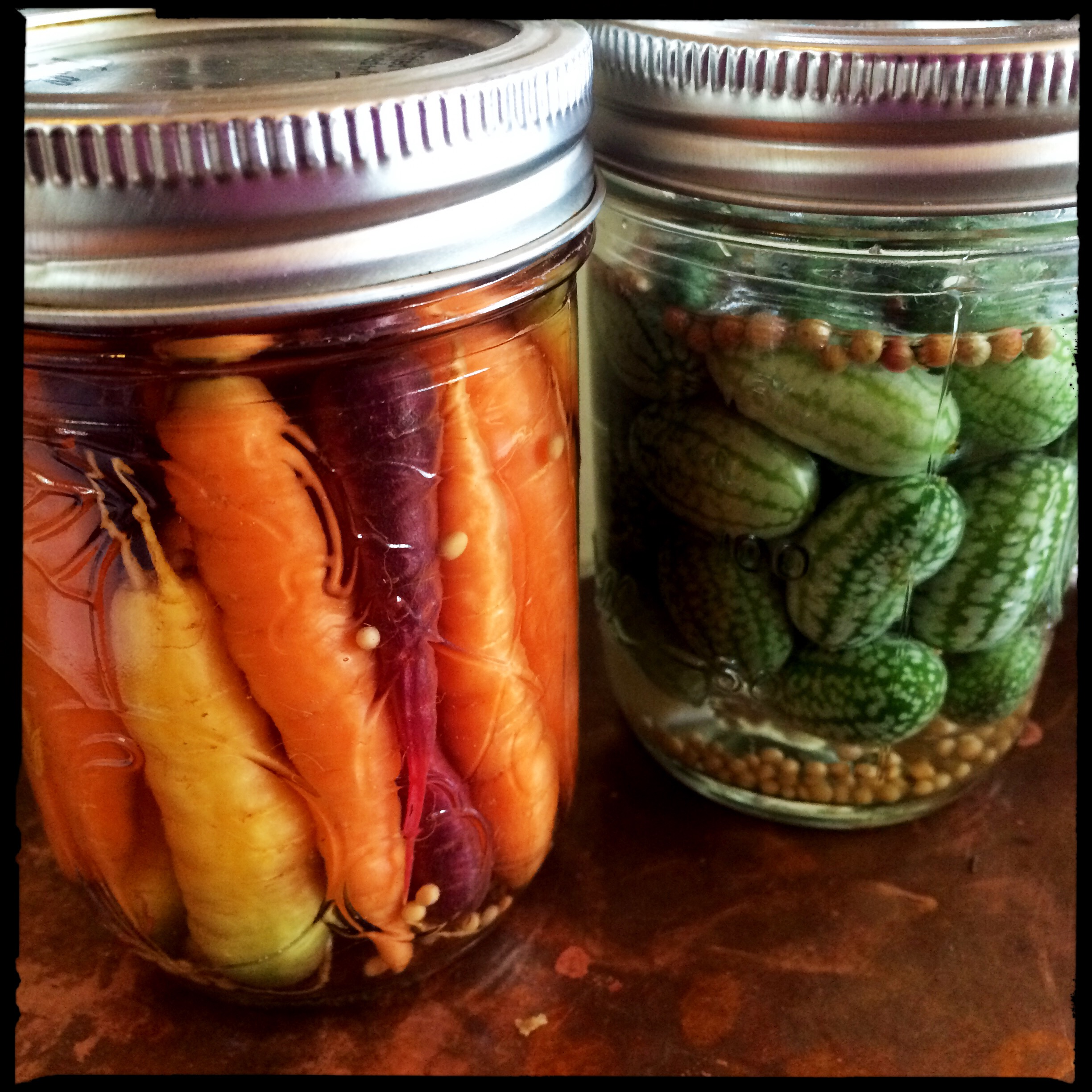... except for the handful we snacked on, the whole harvest fit into one half-pint jar pickled. Also pickled the whole harvest of Mexican sour gherkins...
