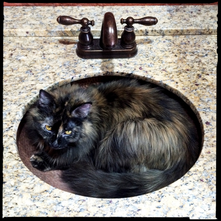 Meanwhile, we've discovered the true purpose of the copper sink.