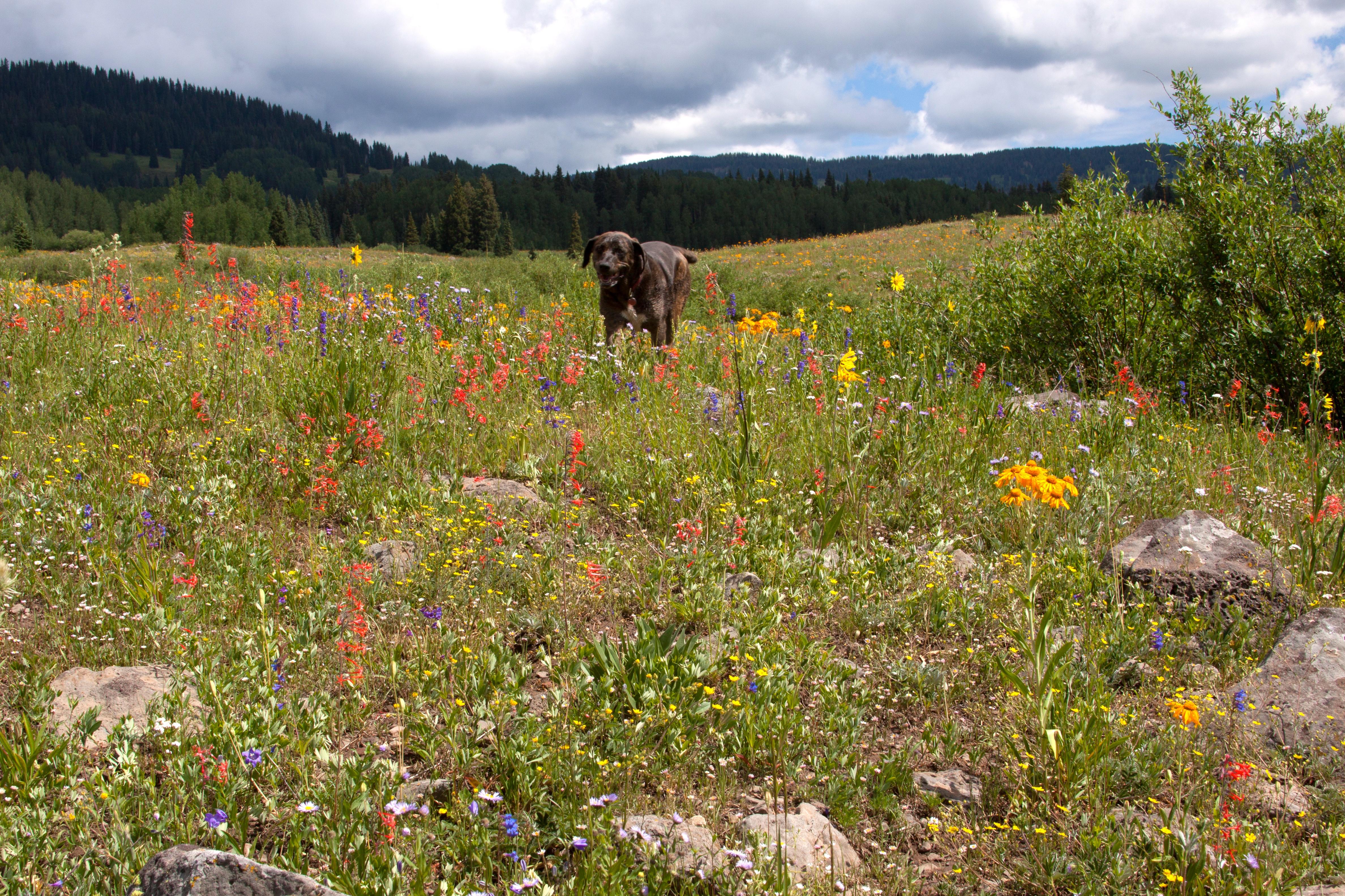 wildflowers-8698.jpg