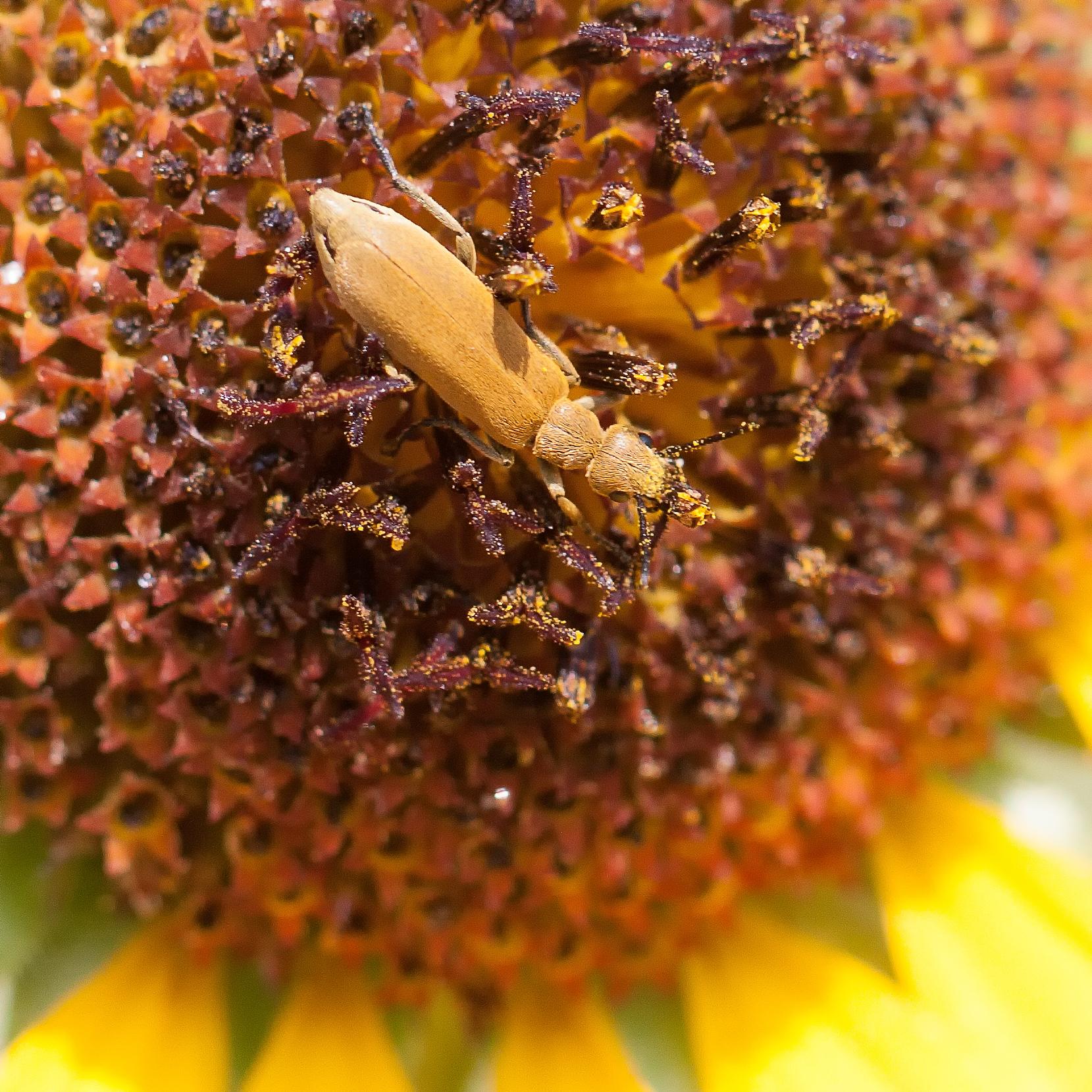 Pollinator-36