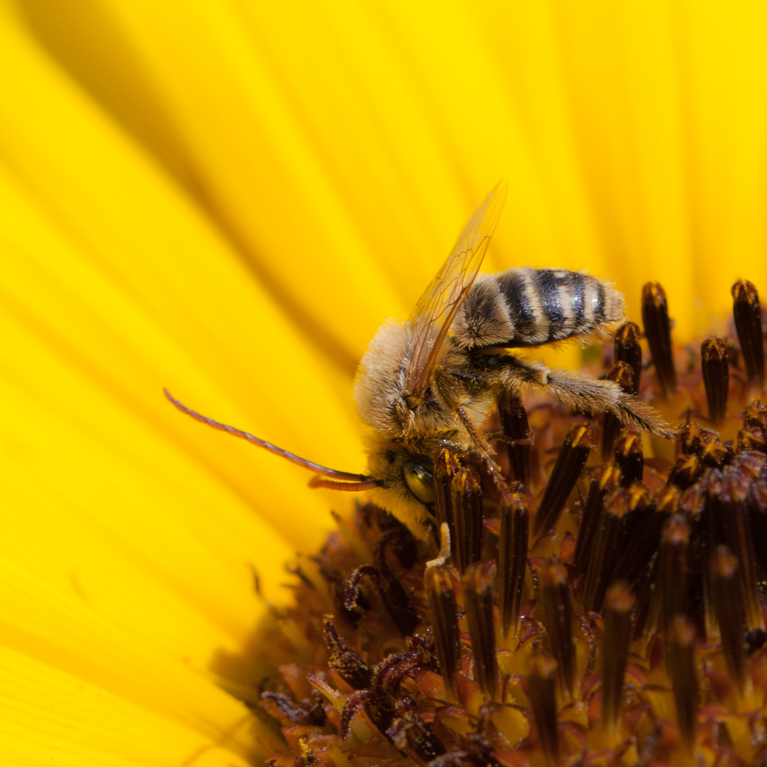 Pollinator-37