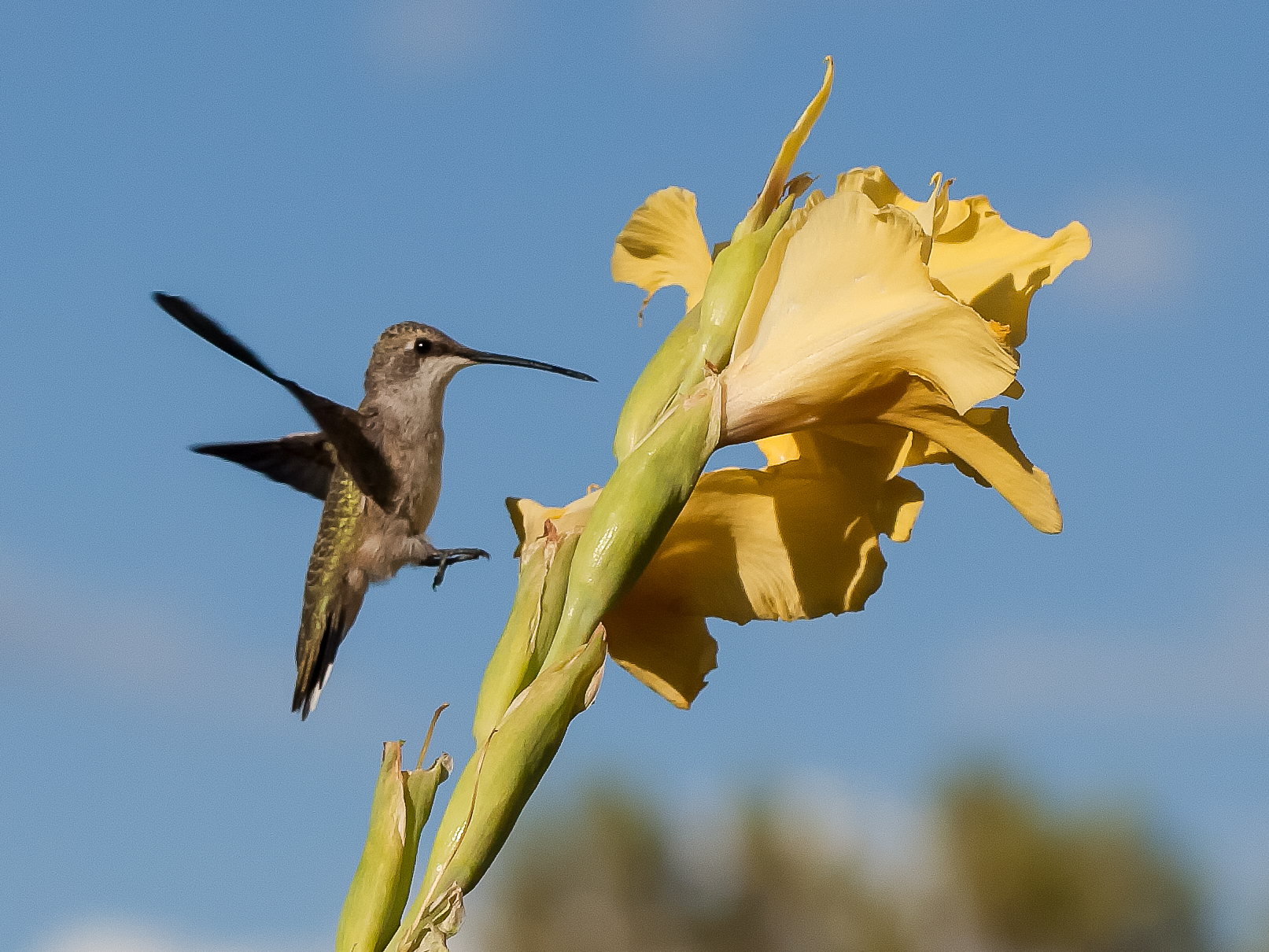 Pollinator-60
