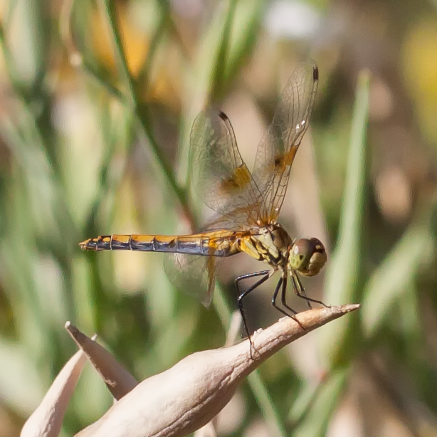 Pollinator-62