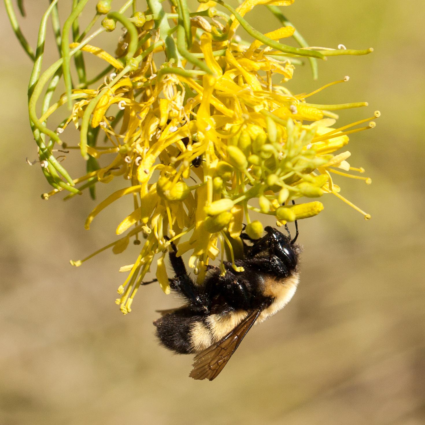 Pollinator-8969