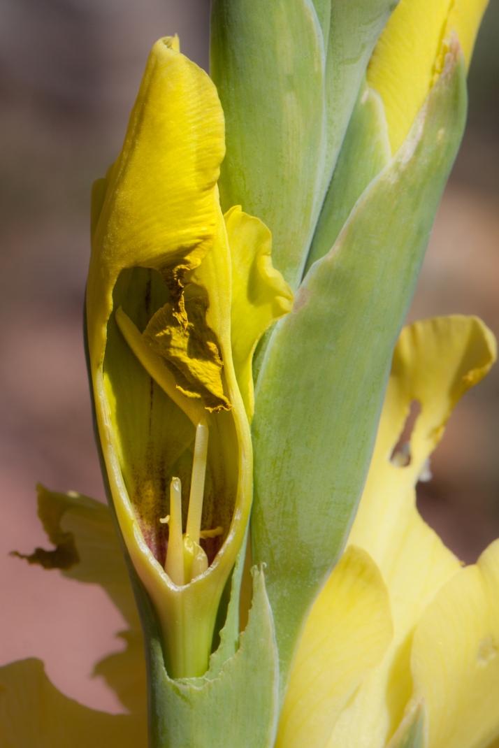 Pollinator-9001