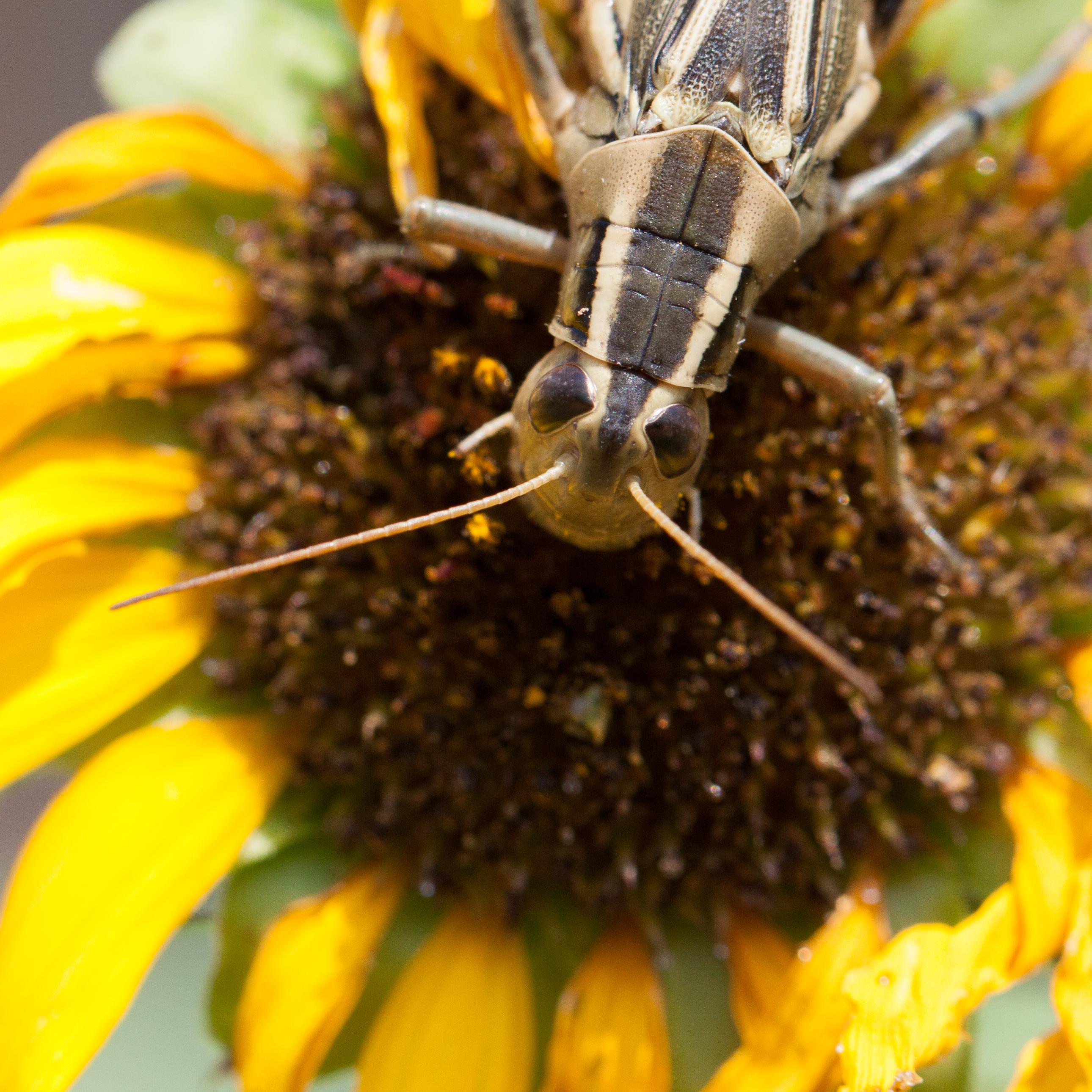 Pollinator-9171